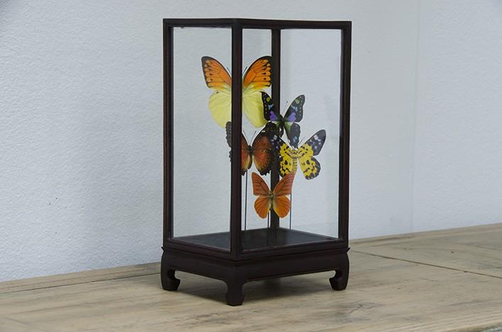 Bunte Schmetterlinge Im Showcase Wohnaccessoires